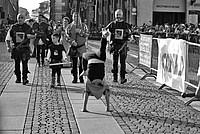 Foto Palio di Parma 2014 Palio_Parma_2014_232