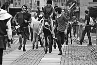 Foto Palio di Parma 2014 Palio_Parma_2014_489
