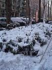 Foto Parma Parma sotto la neve 2005 08