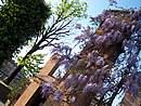 Foto Parma parma009