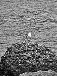 Foto Portofino e Santa Margherita Portofino e Santa Margherita 096