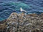Foto Portofino e Santa Margherita Portofino e Santa Margherita 099