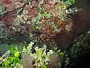 Foto Puglia 2004 Puglia_Otranto_2004_17