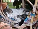 Foto Scorci Bedonia micio che dorme