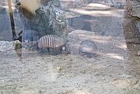 Foto Vacanza Roma - Zoo Roma_526