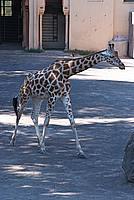 Foto Vacanza Roma - Zoo Roma_527