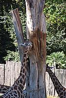 Foto Vacanza Roma - Zoo Roma_528
