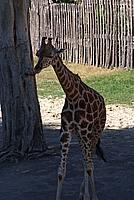 Foto Vacanza Roma - Zoo Roma_529