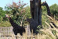 Foto Vacanza Roma - Zoo Roma_530