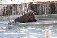 Foto Vacanza Roma - Zoo Roma_531