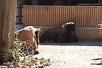 Foto Vacanza Roma - Zoo Roma_532