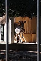 Foto Vacanza Roma - Zoo Roma_533