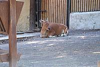 Foto Vacanza Roma - Zoo Roma_534