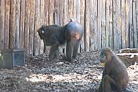 Foto Vacanza Roma - Zoo Roma_535