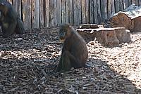Foto Vacanza Roma - Zoo Roma_536