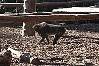 Foto Vacanza Roma - Zoo Roma_537