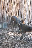 Foto Vacanza Roma - Zoo Roma_538