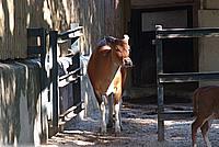 Foto Vacanza Roma - Zoo Roma_539