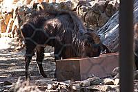 Foto Vacanza Roma - Zoo Roma_541