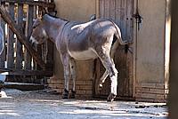 Foto Vacanza Roma - Zoo Roma_542