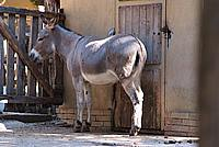 Foto Vacanza Roma - Zoo Roma_543