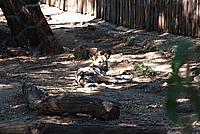 Foto Vacanza Roma - Zoo Roma_544