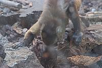 Foto Vacanza Roma - Zoo Roma_545