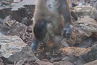 Foto Vacanza Roma - Zoo Roma_546