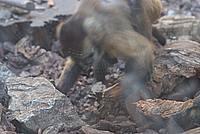 Foto Vacanza Roma - Zoo Roma_547