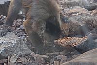 Foto Vacanza Roma - Zoo Roma_548