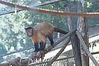 Foto Vacanza Roma - Zoo Roma_549