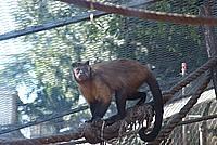 Foto Vacanza Roma - Zoo Roma_550