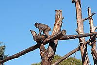 Foto Vacanza Roma - Zoo Roma_553