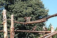 Foto Vacanza Roma - Zoo Roma_554