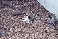 Foto Vacanza Roma - Zoo Roma_555