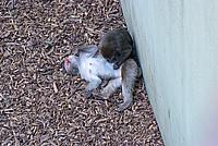 Foto Vacanza Roma - Zoo Roma_557