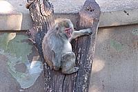 Foto Vacanza Roma - Zoo Roma_559