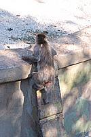 Foto Vacanza Roma - Zoo Roma_560