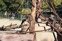 Foto Vacanza Roma - Zoo Roma_561