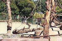 Foto Vacanza Roma - Zoo Roma_563