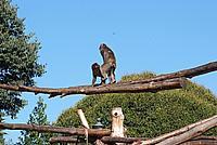 Foto Vacanza Roma - Zoo Roma_567