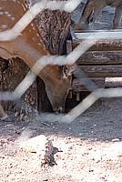 Foto Vacanza Roma - Zoo Roma_568