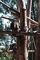 Foto Vacanza Roma - Zoo Roma_569