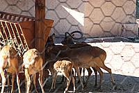 Foto Vacanza Roma - Zoo Roma_570