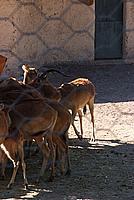Foto Vacanza Roma - Zoo Roma_571