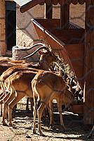 Foto Vacanza Roma - Zoo Roma_572
