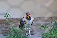 Foto Vacanza Roma - Zoo Roma_576