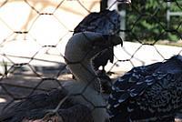 Foto Vacanza Roma - Zoo Roma_579