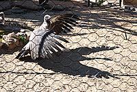Foto Vacanza Roma - Zoo Roma_585