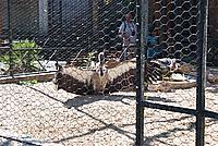 Foto Vacanza Roma - Zoo Roma_586